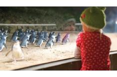 Penguin Parade Activities