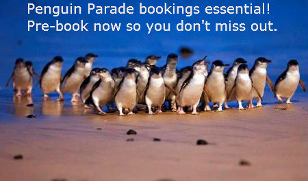Bookings Essential See the Penguins