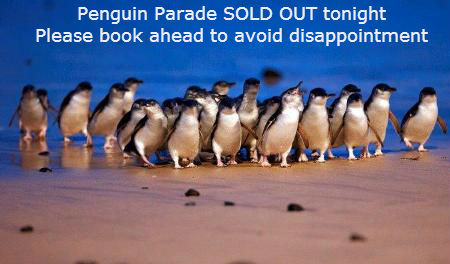 Sold Out See the Penguins