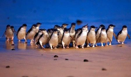 See the Penguins
