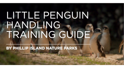 little penguin handling training guide 01