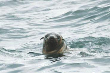 Seal in water3
