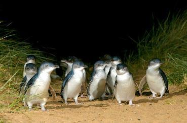 Underground Penguins