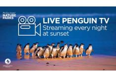 live penguin tv graphic grid