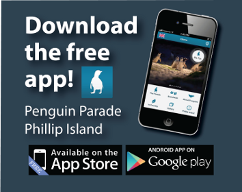 App Penguin Parade home
